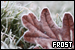 Weather/Seasons/Time: Frost